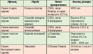 derevya-rekordsmeny